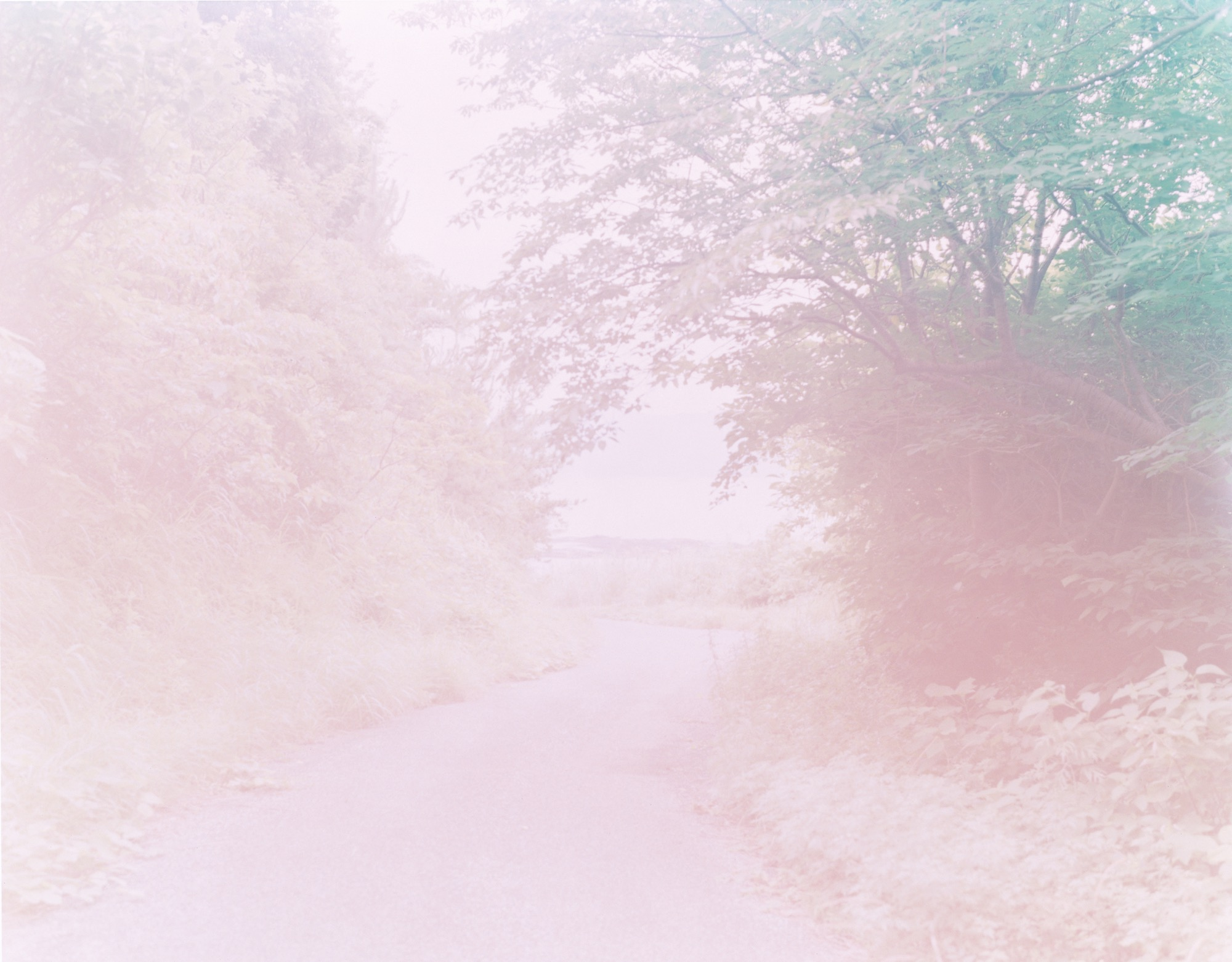 altblog-rinko-kawauchi-the-river-embraced-me-web